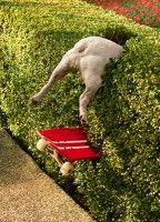 Hmm, give a pug a skateboard . . . .