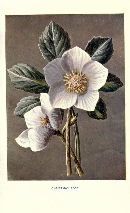Familiar garden flowers, - Biodiversity Heritage Library