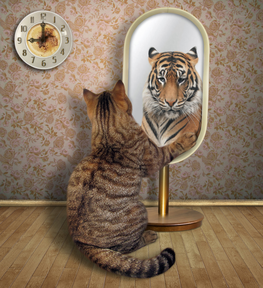 Cat Looks Mirror Sees Reflection Tiger Cat Tatto Feng Shui Mirrors Feng Shui