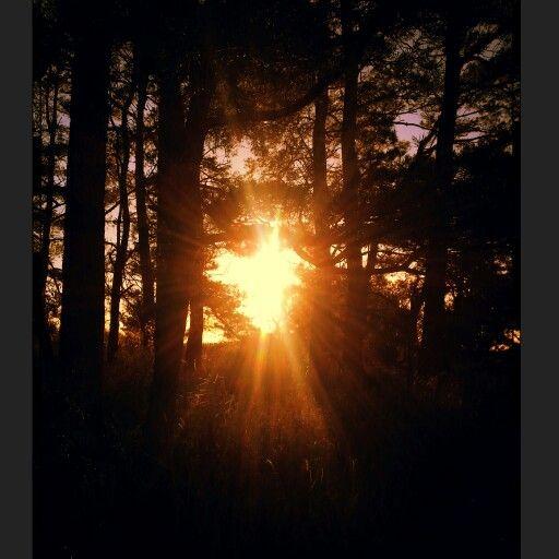 Abendsonne zwischen den Bäumen