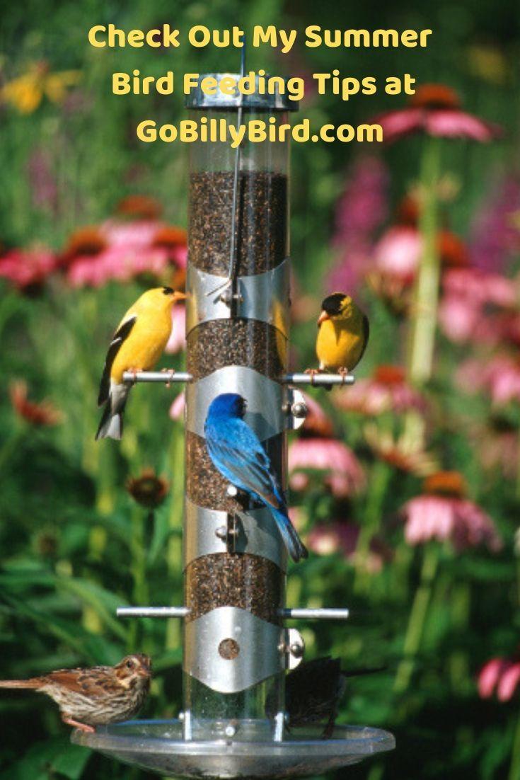 Summer Bird Feeding Tips | Bird feeders, Backyard birds, Bird