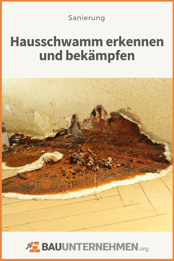 Hausschwamm Erkennen Ursachen Bekampfung Kosten Hausschwamm Schwamme Holzpilze