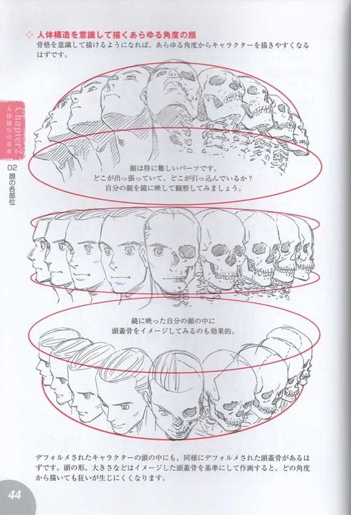 drawing art head draw skull view human Anatomy turn direction ...