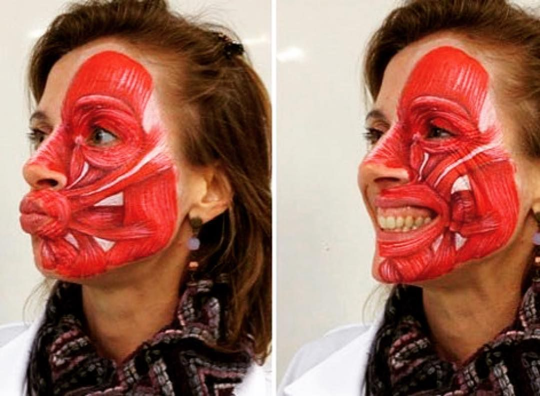 Such A Cool Idea Showing The Muscles Of The Face Anatomy