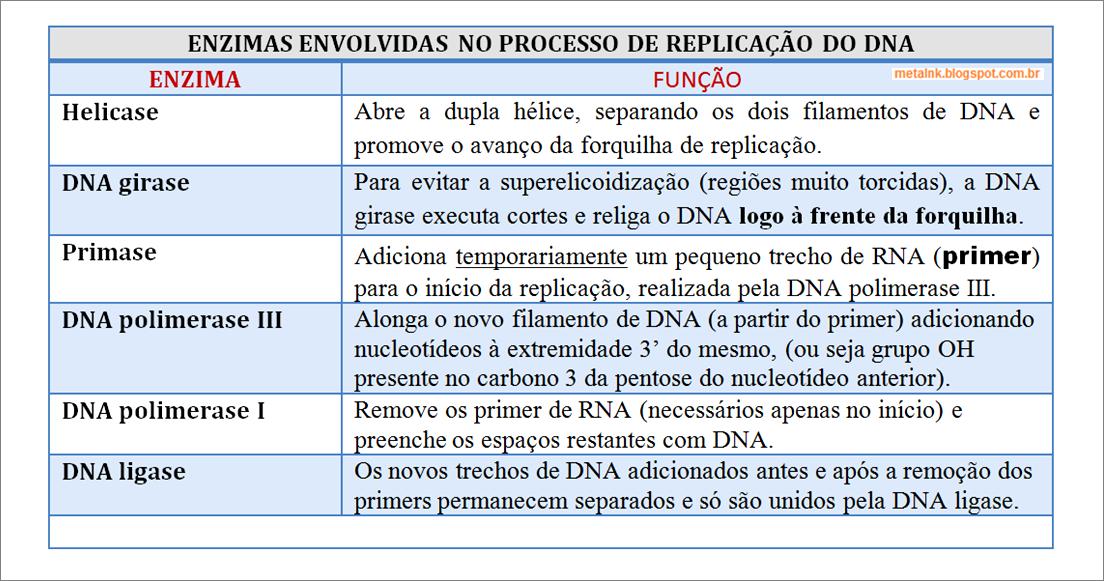 Quadro-resumo. Enzimas envolvidas na replicação do DNA e suas funções.