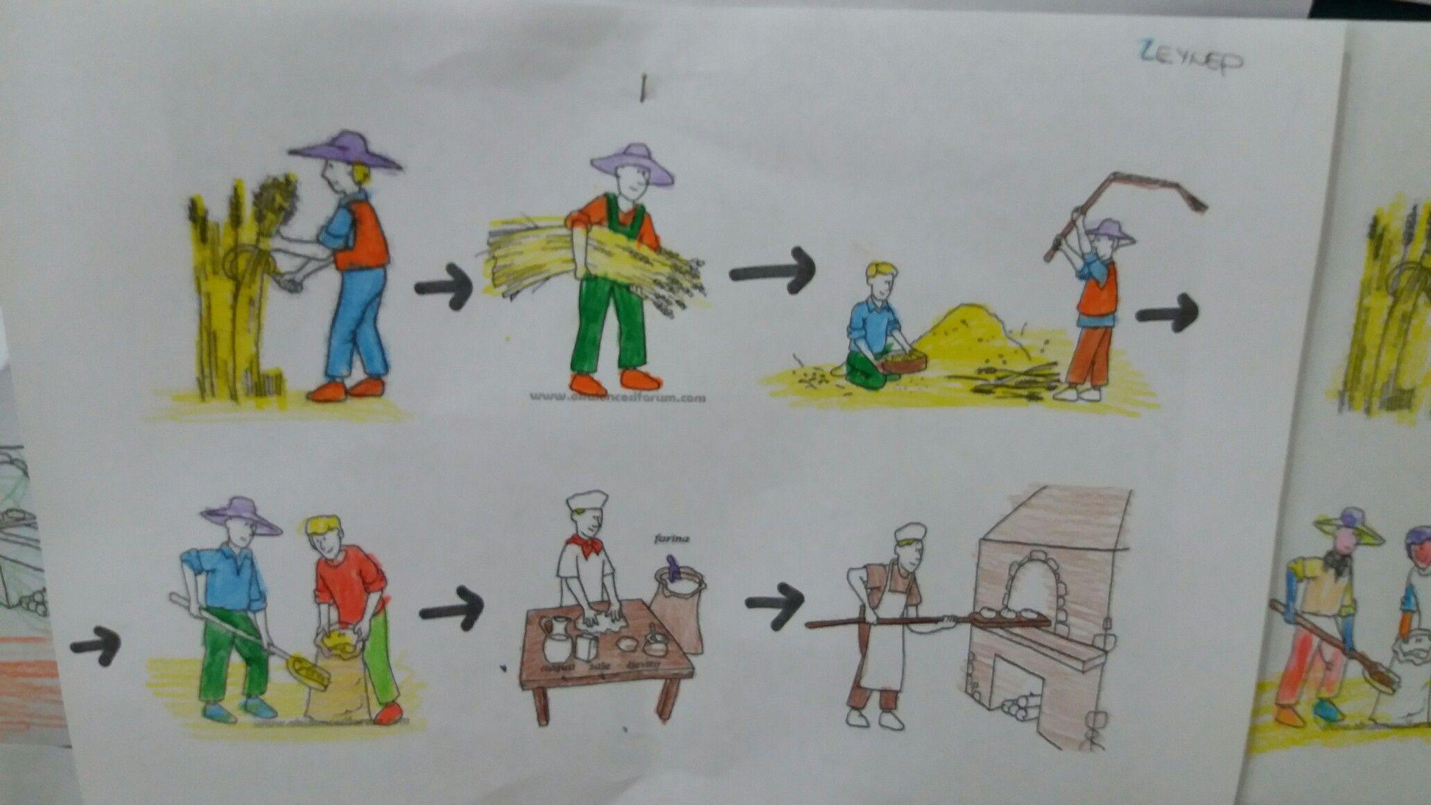 Buğday Ekmek Buğdayın Ekmek Olması Sanat Etkinlikleri