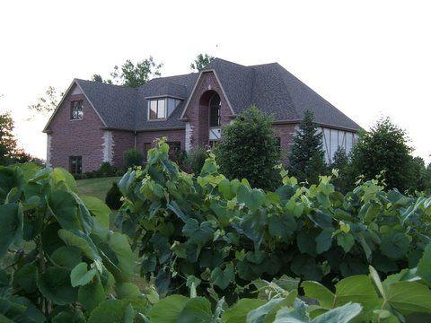 Valentino Vineyards Inc., Long Grove