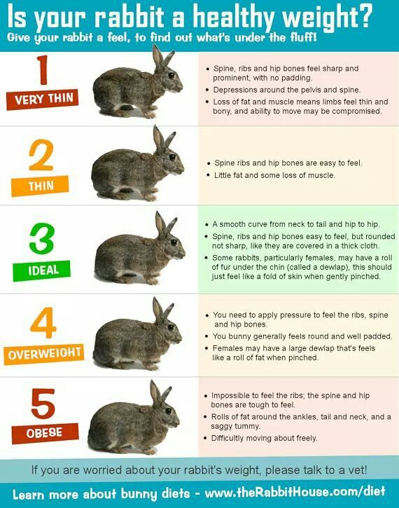 Bunny Weight Chart