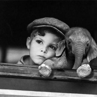 Squee! I wish I had a little elephant.