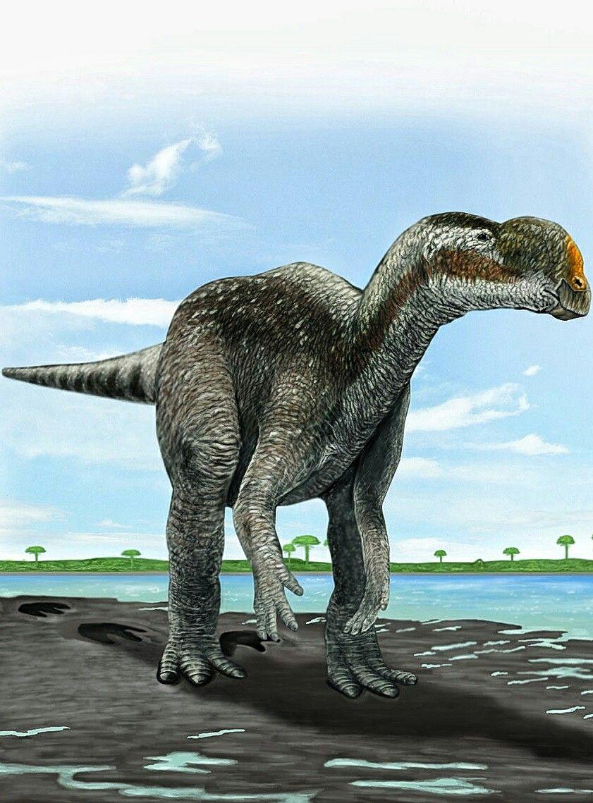Muttaburrasaurus Was A Genus Of Herbivorous Ornithopod Dinosaur