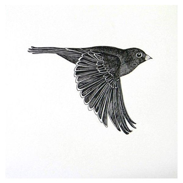 flying bird original ink drawing ❤ liked on Polyvore featuring home, home decor, wall art, bird wall art, bird home decor, ink drawing and bird drawing