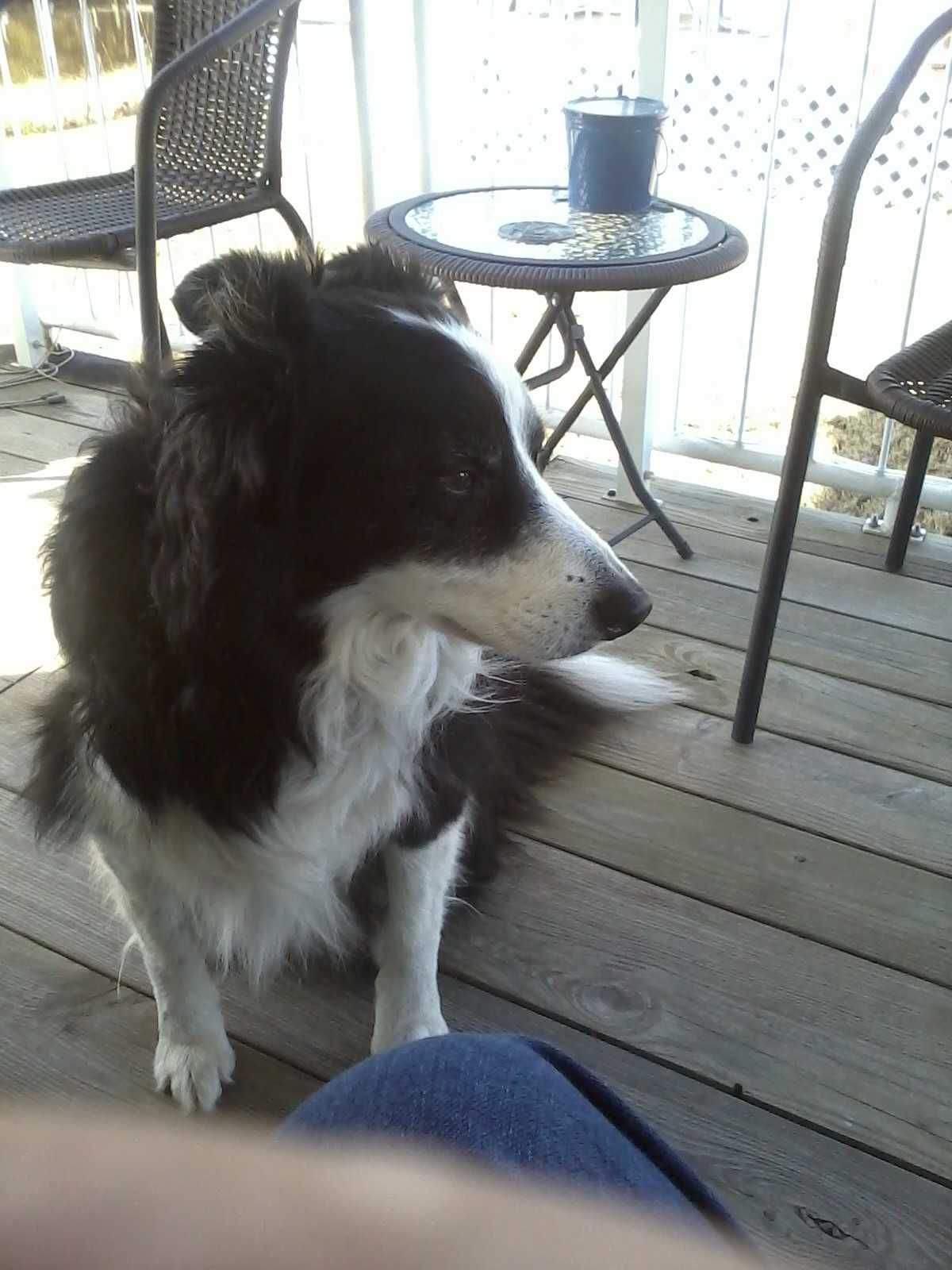 Parents Name: Charlie and Johnnie Whitley Pets Name: Scotty Pet Species: Dog Pets Favorite thing to do: Catching his frisbee Eulogy: Our hearts were broken on June 21, 2012 when God saw you had suf...