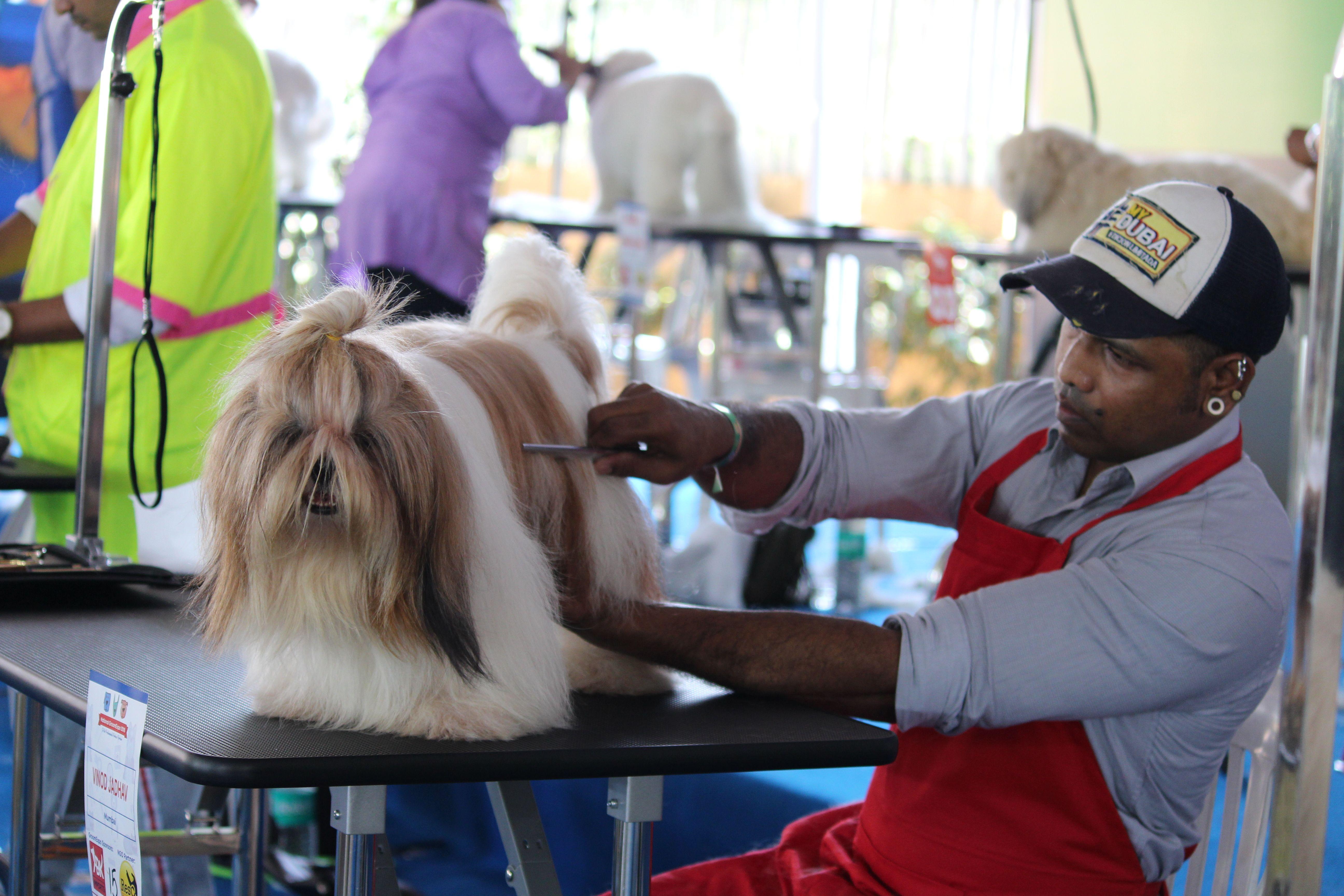 Andis Best Dog Grooming Tools Pet Grooming Tools Grooming Tools Dog Grooming Tools