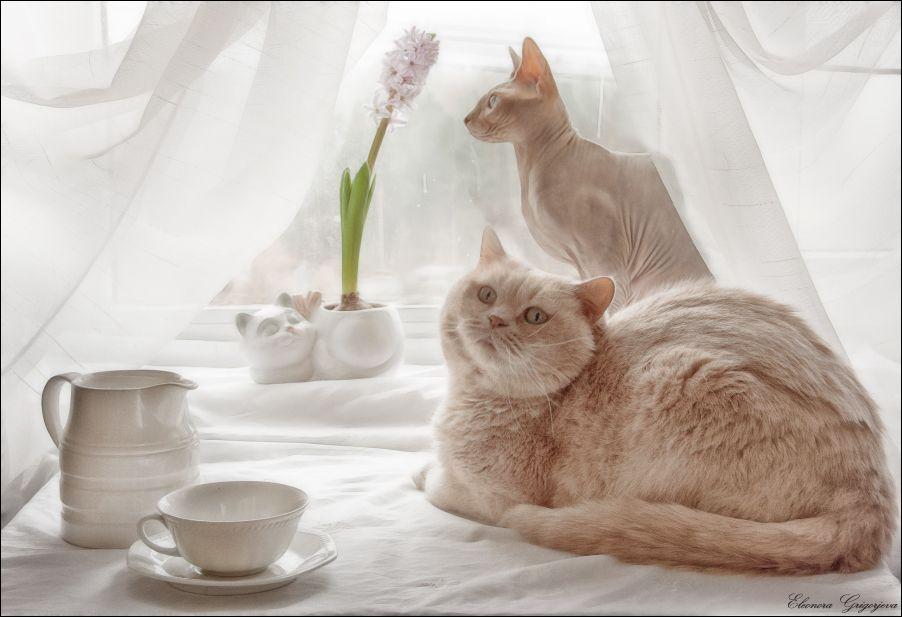 открытка доброе утро солнце будильник котенок