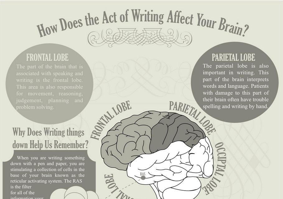 How Does the Act of Writing Affect Your Brain? | Writing, Educational  infographic, Writing a book