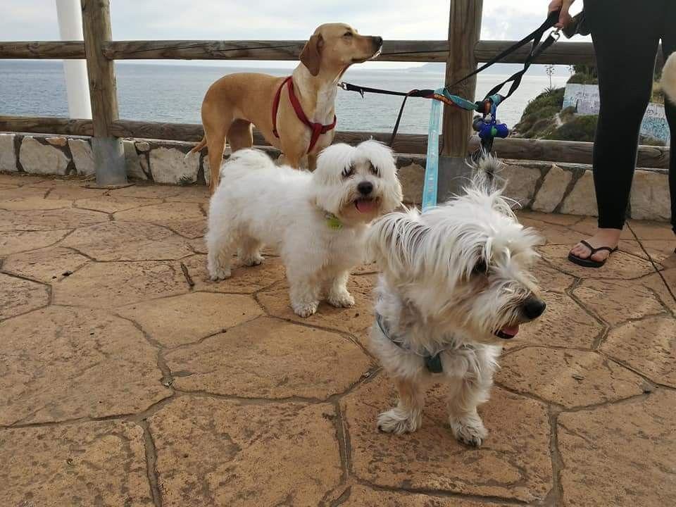 Paseo con Penny, Milo, Cuqui y Juana 05 /17