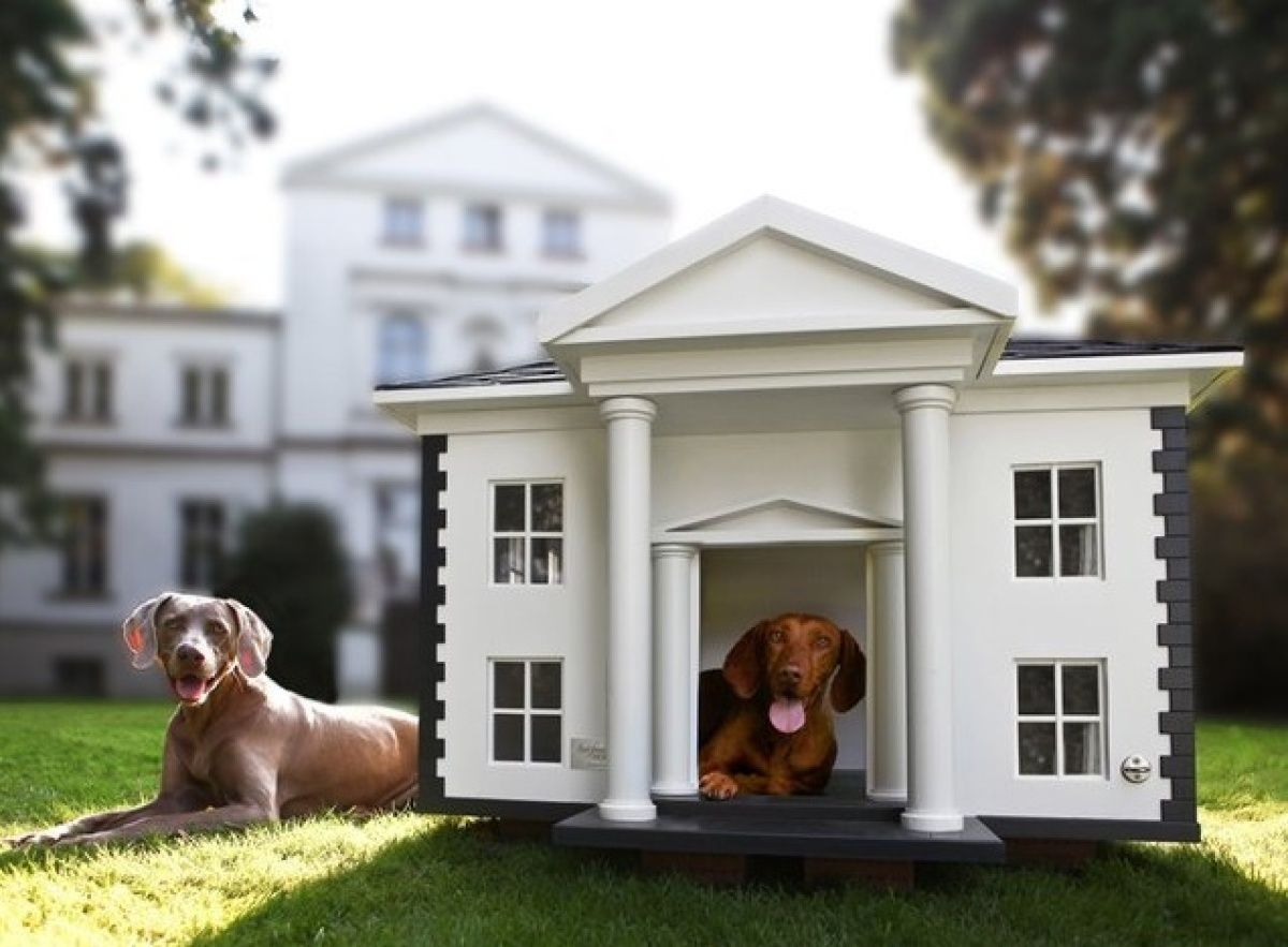 Wtf People Actually Buy These Things Online Dog Mansion Dog