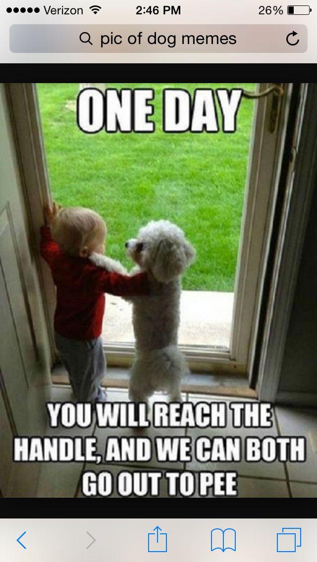 My dog always scratches on the door