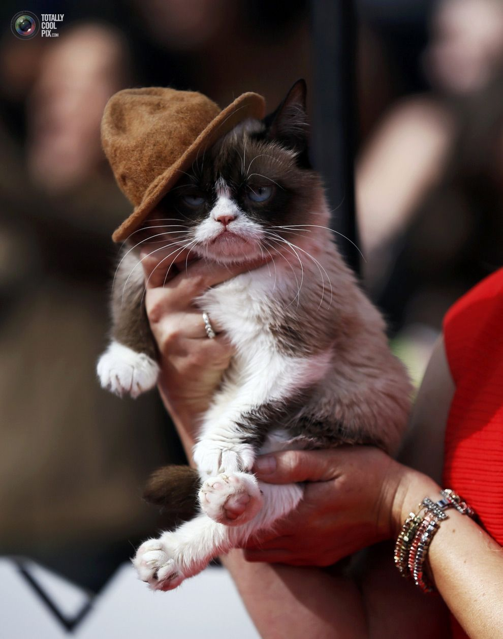 Grumpy cat arrives at the 2014 MTV Movie Awards in Los Angeles.