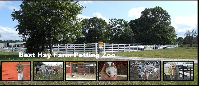 Home best hay farm petting zoo with images ocala