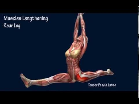 Split Front True Split Hip Squared Stretching Flexibility Training | EasyFlexibility.com