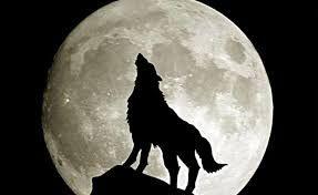 Loup Qui Hurle A La Lune Silhouette De Loup Loup Qui Hurle