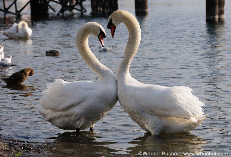17+ Animals that symbolize love ideas in 2021