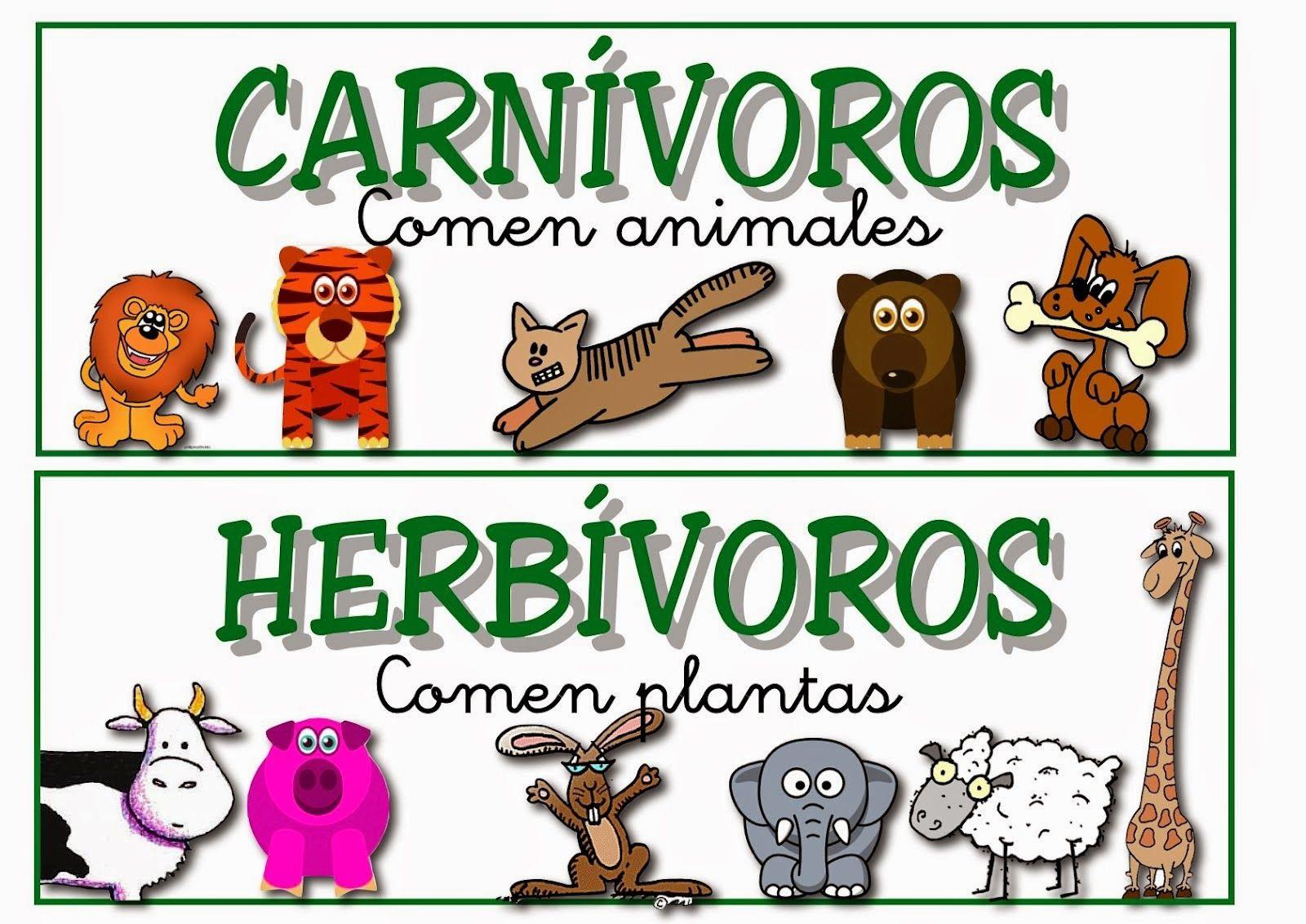 Oviparous and Non-Oviparous Animals   Egg, Activities and Animal