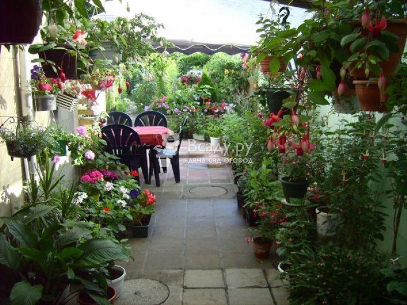 10 самых красивых цветущих растений в июле для веранды и террасы