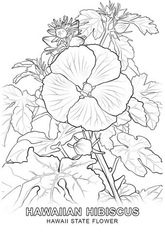 Hawaii State Flower coloring page