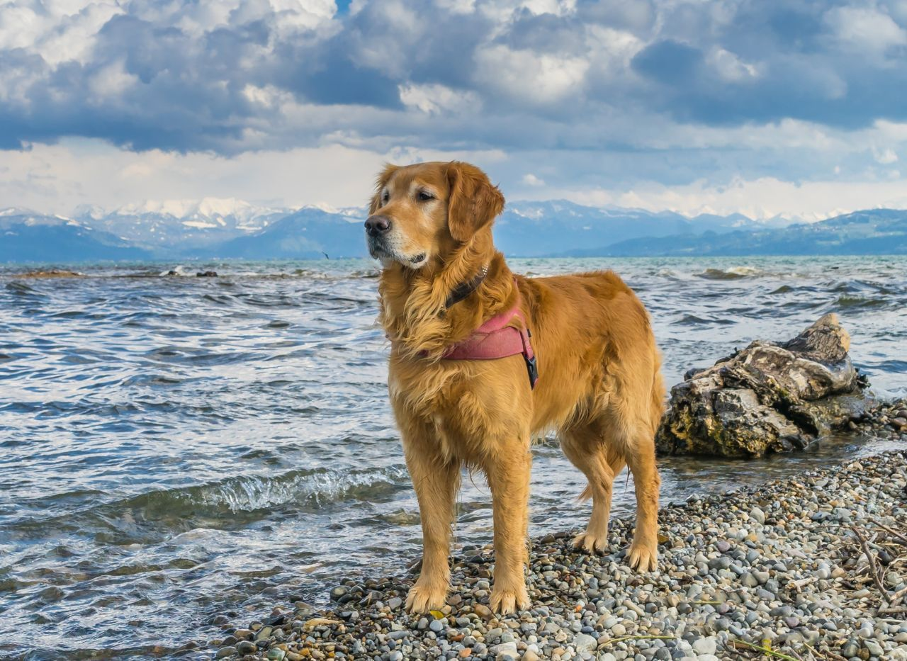 Urlaub Mit Hund Am See Ferien Am Wasser Hunderassen Golden Retriever Und Schone Hunde