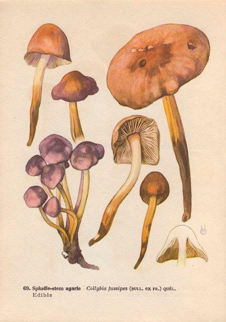 diagram of a mushroom mushroom diagram art print vintage botanical wall art by agedpage diagram of a typical mushroom art print vintage botanical wall art