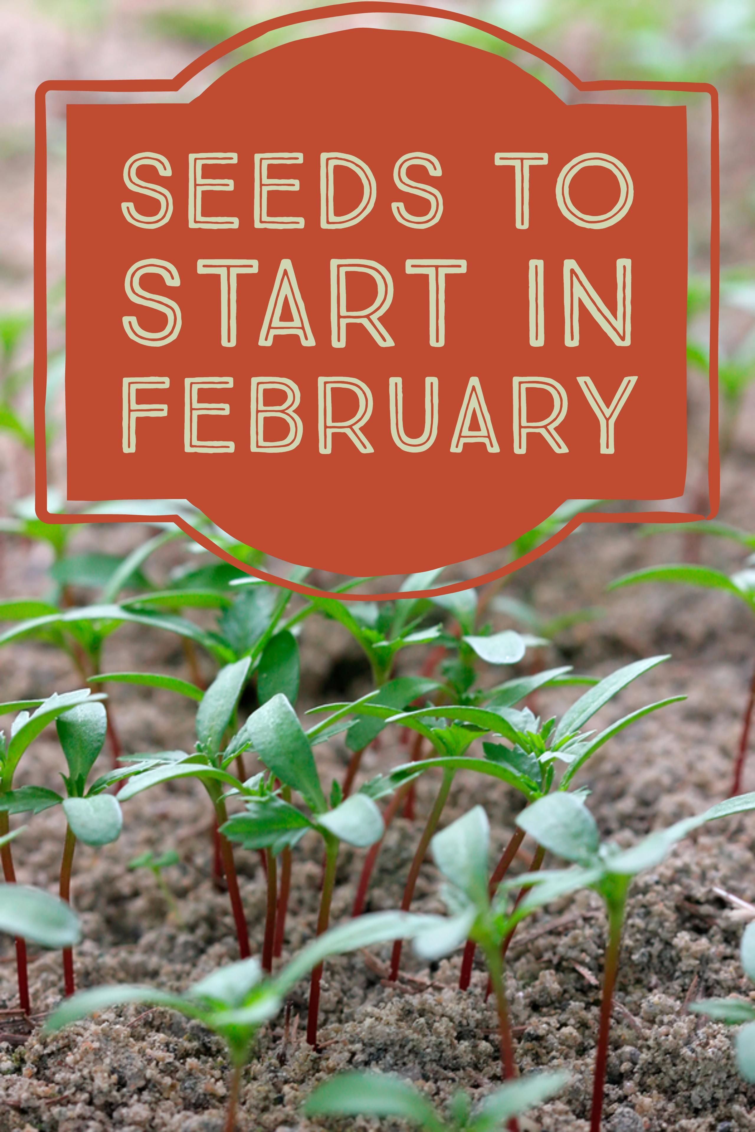 Seeds To Start In February Vegetable Garden Planner Hydroponic