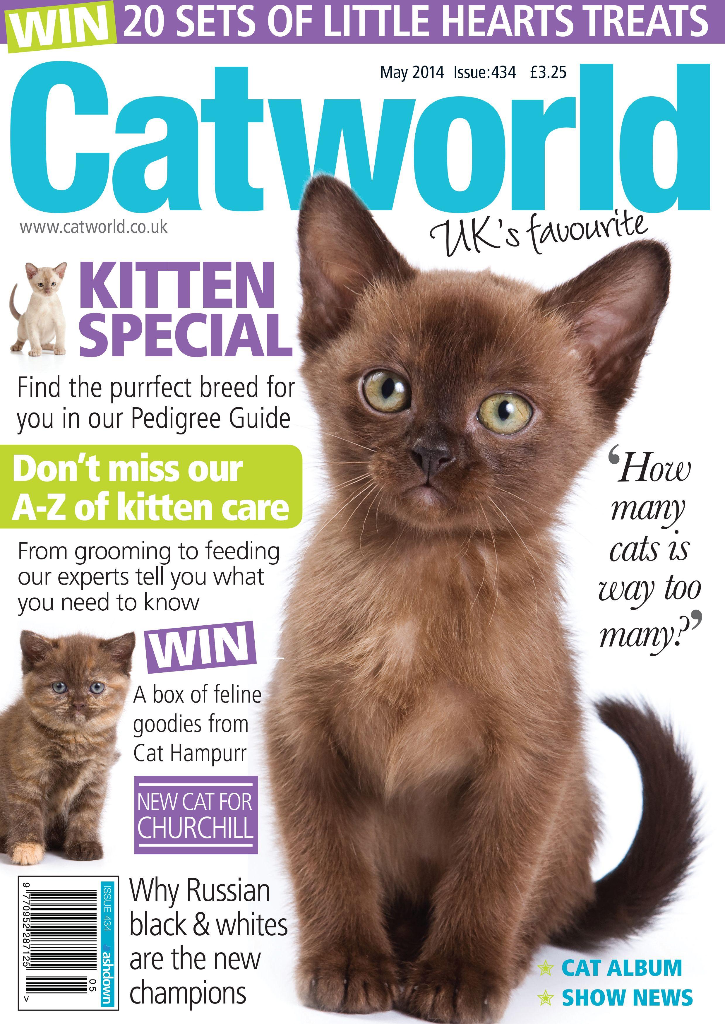 Issue 434 Kitten Care Purrfect Kitten