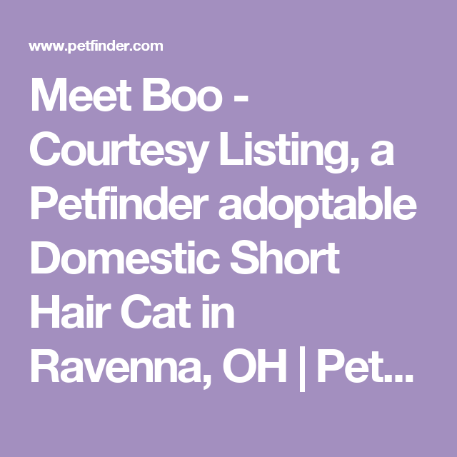Meet Boo - Courtesy Listing, a Petfinder adoptable Domestic Short Hair Cat in Ravenna, OH | Petfinder.com