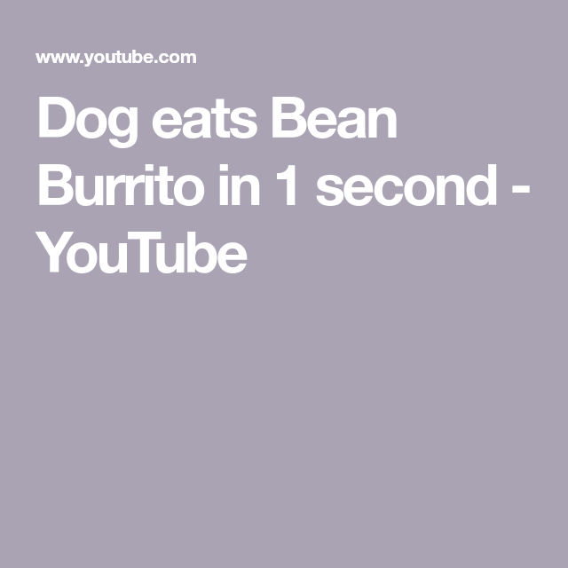 Dog Eats Bean Burrito In 1 Second Youtube Dog Eating Burritos Eat
