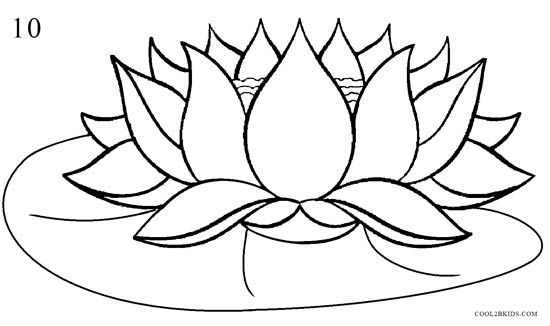 How To Draw Lotus Flowers
