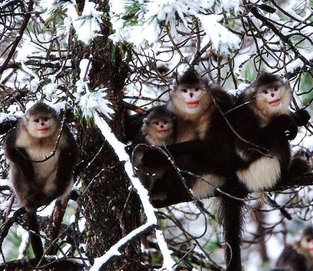 As cute as a tree full of Monkeys.