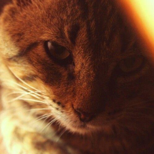 #fotografia #gato #peppy