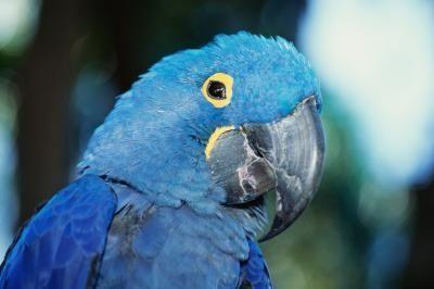 Endangered Plants In The Amazon Rain Forest Rainforest Animals