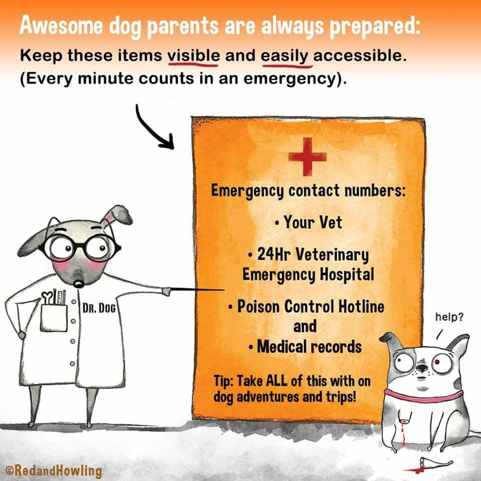 Pin By Angel Seeker On Animal Advocacy Emergency Hospital Dog Love Pet Care