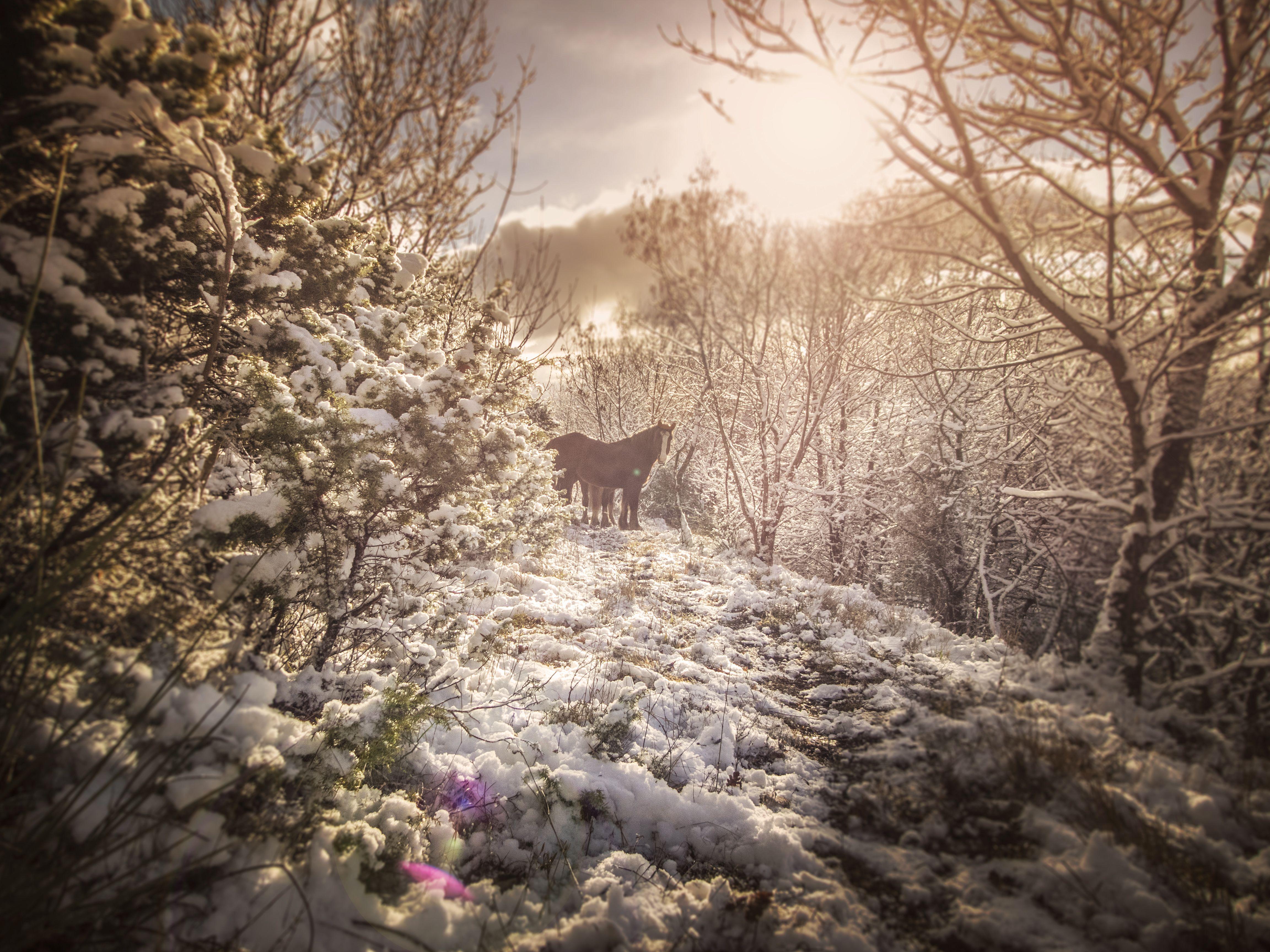 #wildlife #horses #travel #gurusays #snow #mountain #pace