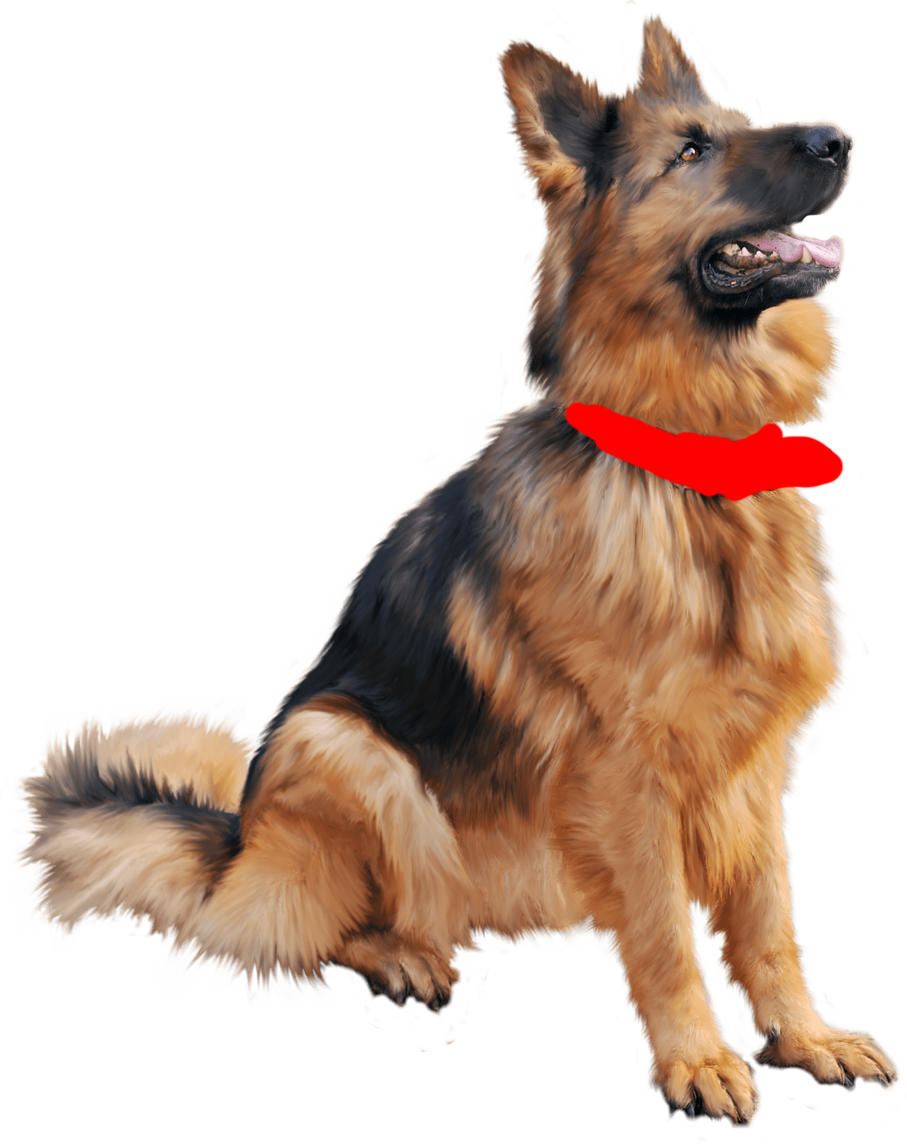 Dog Picture With Transparent Background