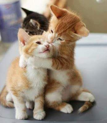 You Are My Kitten