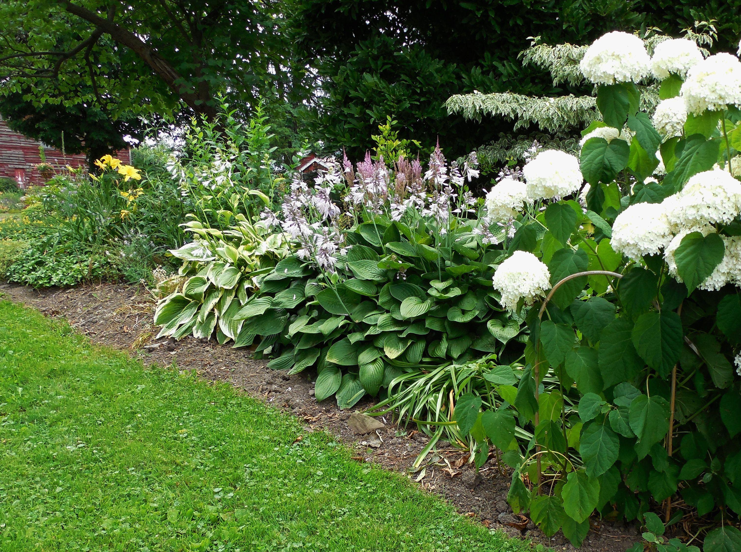 Hydrangea Day Lilies Hosta Shade Garden Day Lilies Plants