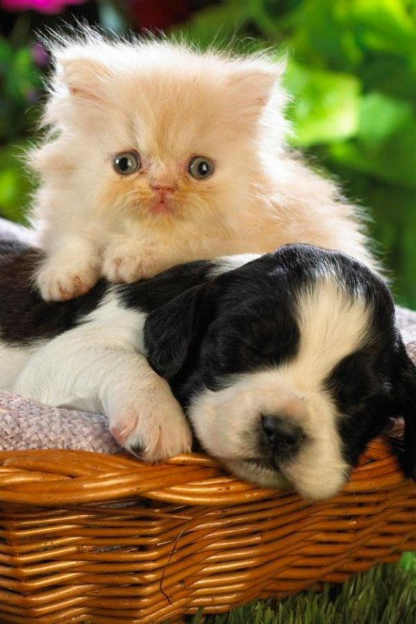 Aww So Cute Puppy And Kitten Are Best Friends With Images