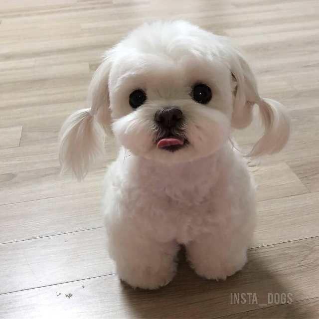 Photo of El cachorro más lindo del día 26 fotos – # FOTOS #de #el #suevo #sweetest #day #W …