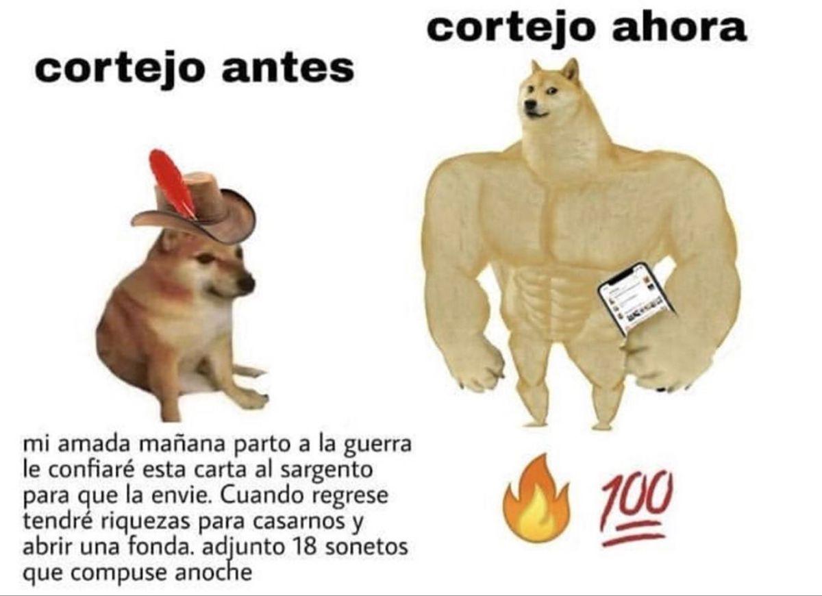 Pin De C A M I Y S O P H I En El Perro Memes Divertidos Memes Comicos Meme Divertido