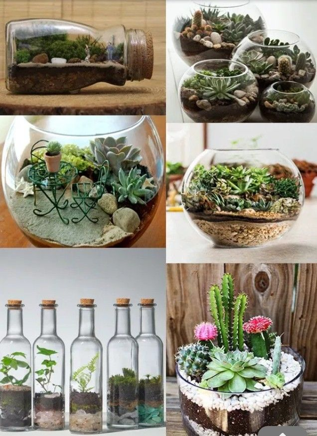 Pin by Queen T on House Plants Plants, Garden tools