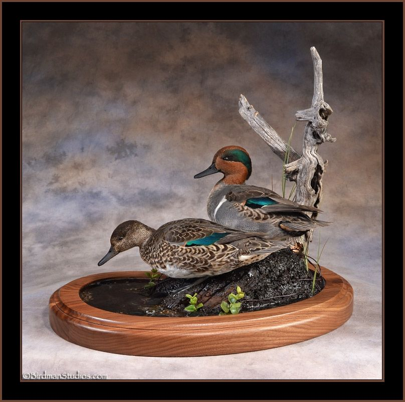 New Mounts Gallery 1 Bird Taxidermy Bird Carving Waterfowl Taxidermy